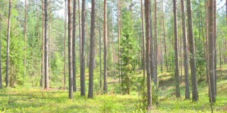 European Investment Bank invest €12.5m in Irish forestry
